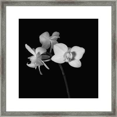 Framed Print featuring the photograph Triplets by Ron White
