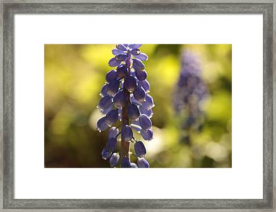 Tripping The Light Fantastic Framed Print by Connie Handscomb
