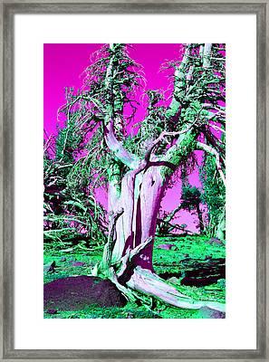 Trippy Tree Framed Print