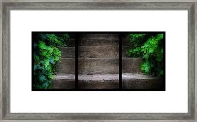 Triptych Ivy Steps Framed Print