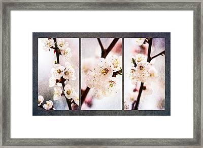 Triptych Light Of Spring 1 Framed Print