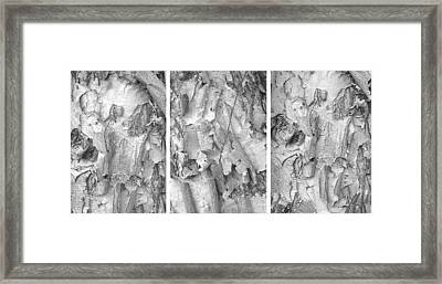 Triptych Of Curling Tree Bark In Black And White With A White Background Framed Print