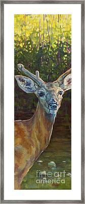 Tristan Framed Print by Patricia A Griffin