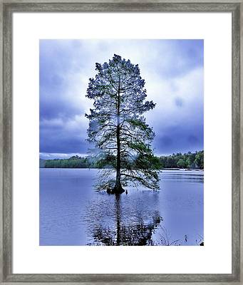 The Healing Tree - Trap Pond State Park Delaware Framed Print