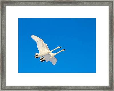 Triumphant Framed Print
