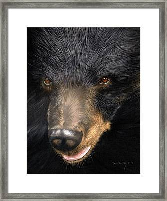 Trixie Moon Bear - In Support Of Animals Asia Framed Print
