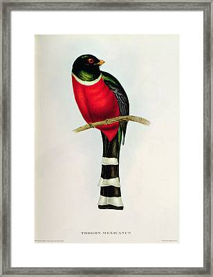 Trogon Mexicanus Framed Print