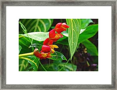 Tropic Beauty Framed Print by Denise Darby