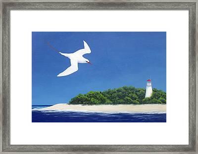 Tropic Bird And Light House Framed Print