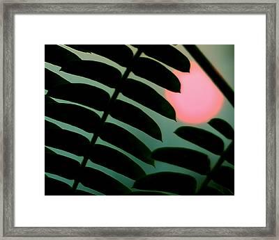 Tropic Of Capricorn Framed Print by Steven Milner