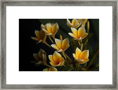 Framed Print featuring the photograph Tropic Welcome by Miguel Winterpacht