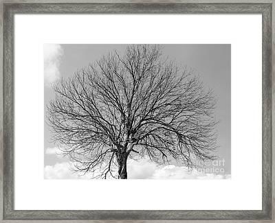 Tropic Winter Framed Print
