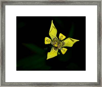 Framed Print featuring the photograph Tropic Yellow by Miguel Winterpacht