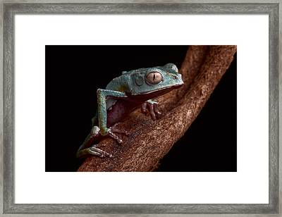 Tropical Amazon Rain Forest Tree Frog Framed Print by Dirk Ercken