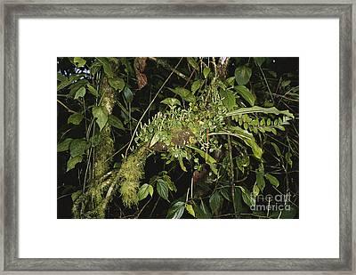 Tropical Ant Garden Framed Print