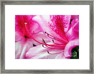 Tropical Azalea Framed Print by Kaye Menner