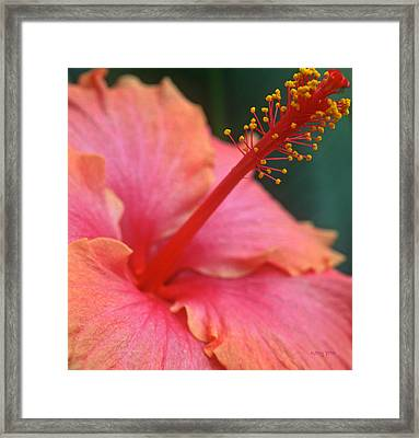 Tropical Beauty Framed Print by Kathy Yates