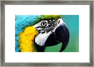 Tropical Bird - Colorful Macaw Framed Print by Sharon Cummings