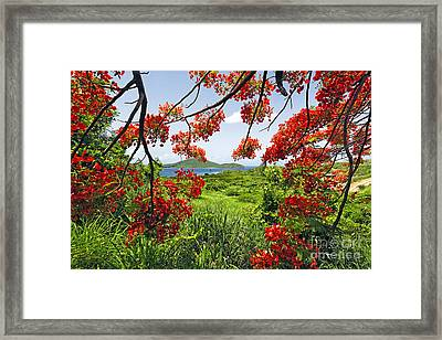 Tropical Bloom Framed Print by George Oze