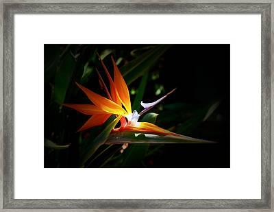Tropical Bloom Framed Print