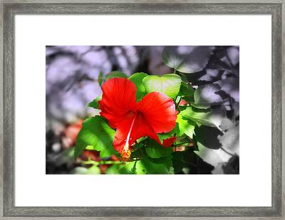 Tropical Burst Framed Print