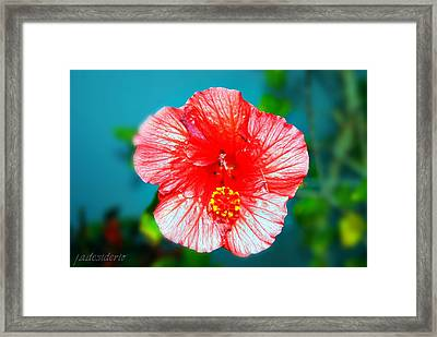 Tropical Burst Redux Framed Print