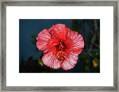 Tropical Burst Subdued Framed Print