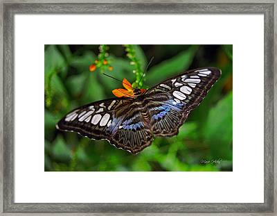 Framed Print featuring the photograph Tropical Butterfly by Marie Hicks
