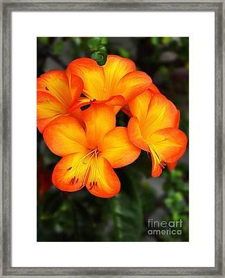 Tropical Delight Framed Print by Kaye Menner