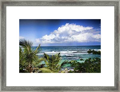 Tropical Dreams Framed Print by Daniel Sheldon