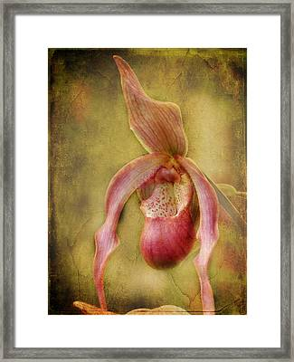 Tropical Enchantment Framed Print