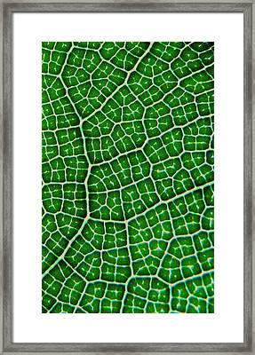 Tropical Fig Leaf Veins Framed Print
