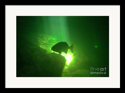 Tropical Fish Shilouette In A Cenote Framed Prints