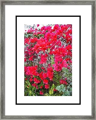 Tropical Flowers Of South Florida Framed Print by Dora Sofia Caputo Photographic Design and Fine Art
