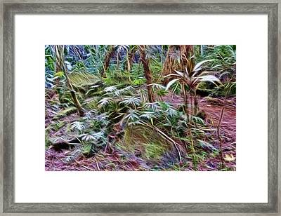 Tropical Forest Floor Framed Print by Linda Phelps
