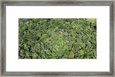 Tropical Forest Near Iguazu Falls Framed Print