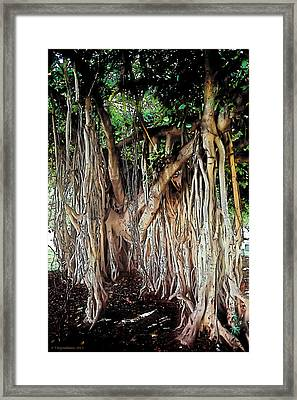 Tropical Fringe Framed Print by Terry Reynoldson