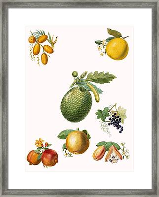 Tropical Fruit Framed Print by English School