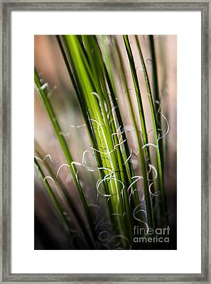 Tropical Grass Framed Print by John Wadleigh