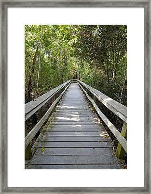 Tropical Hardwood Hammock-1  Framed Print