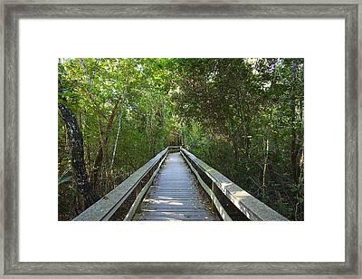 Tropical Hardwood Hammock  Framed Print