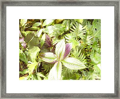 Tropical Framed Print by Heather Morris