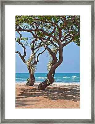 Tropical Heliotrope Trees With White Orchids On Beach Framed Print