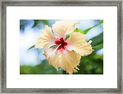 Tropical Hibiscus Framed Print by Georgia Fowler