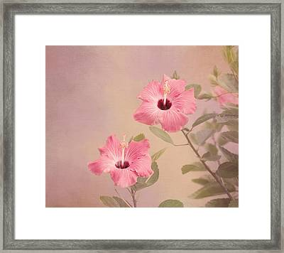 Tropical Hibiscus Framed Print by Kim Hojnacki