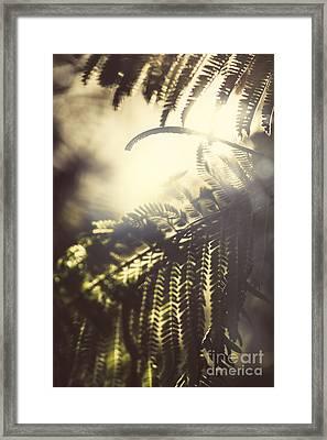 Tropical Jungle Sundown Framed Print by Jorgo Photography - Wall Art Gallery