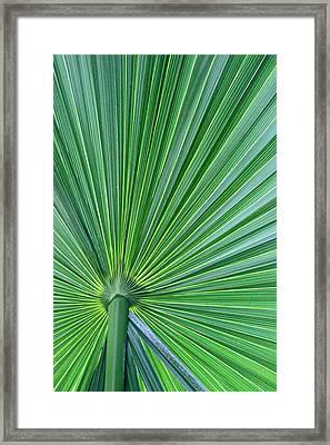 Tropical Leaf Framed Print by Carolyn Stagger Cokley