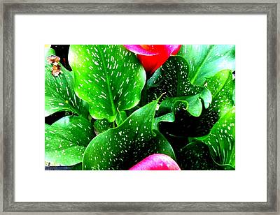 Tropical Leaves Framed Print by Marianne Dow