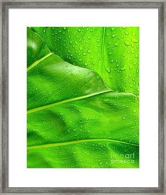 Tropical Leaves Framed Print by Ranjini Kandasamy