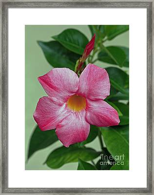 Tropical Mandella Delighjt Framed Print by Inspired Nature Photography Fine Art Photography